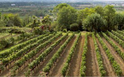 Grape Harvest At The Luxury Saint-James, Bordeaux