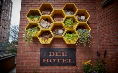 bee-400x250 Jurys Inn, UK Wide