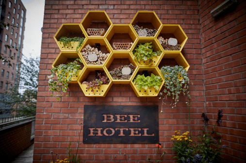 Jurys Inn Manchester Launches Bee Hotel
