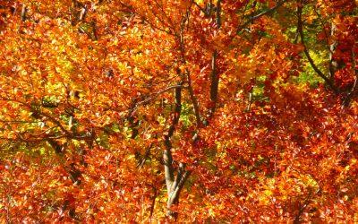 forest-63279_960_720-400x250 News