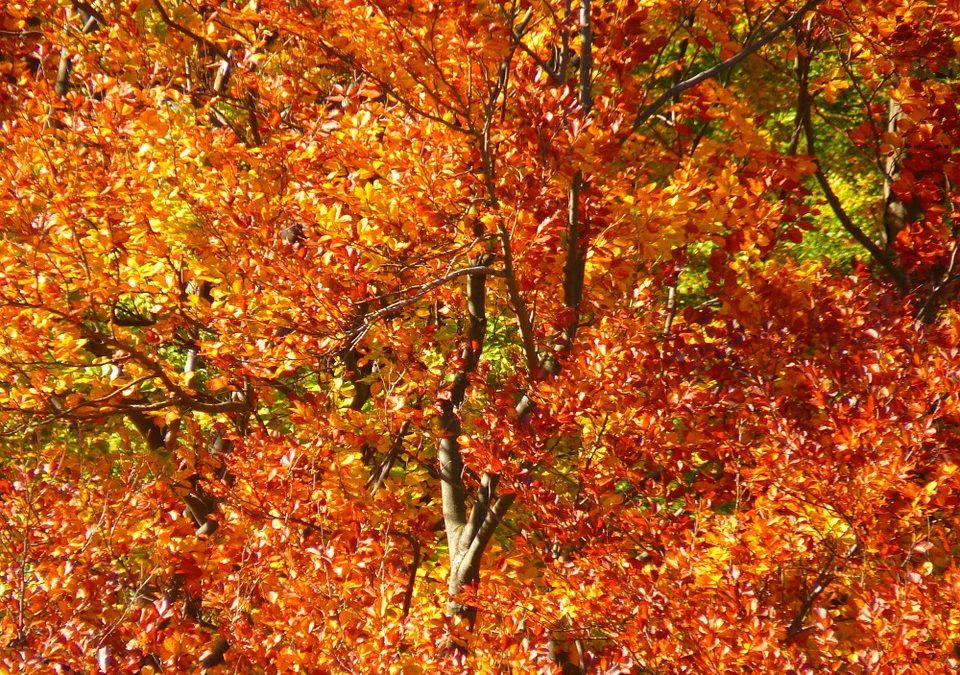 Autumn Walks in Leafy Ludlow